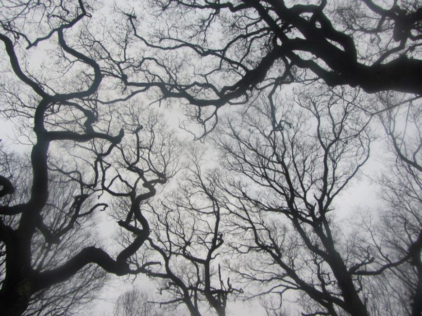 Marga Duggan - Highgate Woods (2011)
