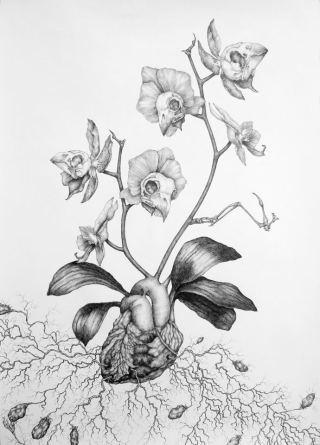 Kate Street - Orchis Nodulosa