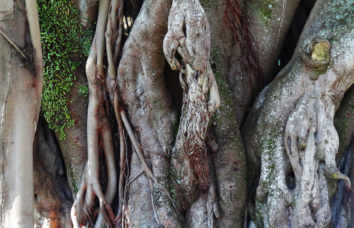 treeskin
