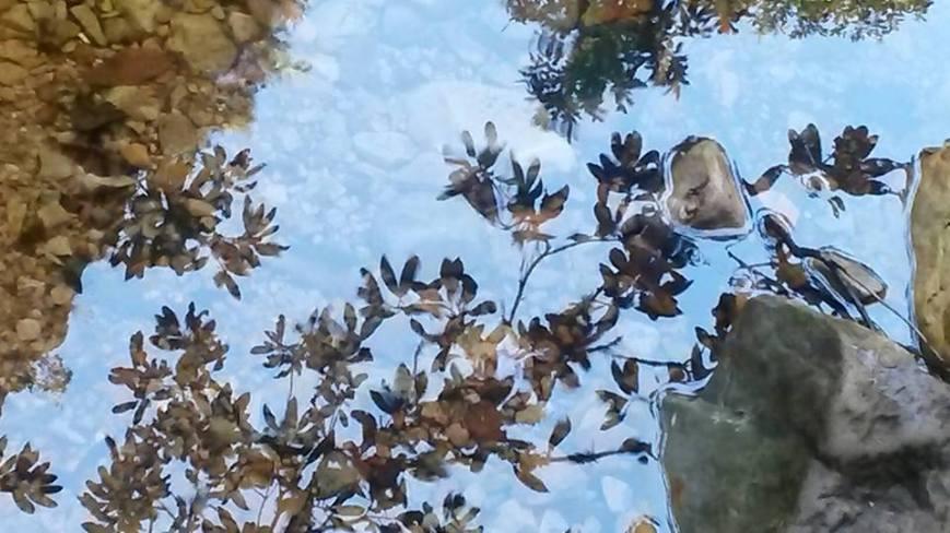 greyton stream